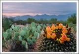 Arizona-Cactus_D2X_7964.jpg