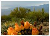 AZ-Cactus_D2X_7960.jpg