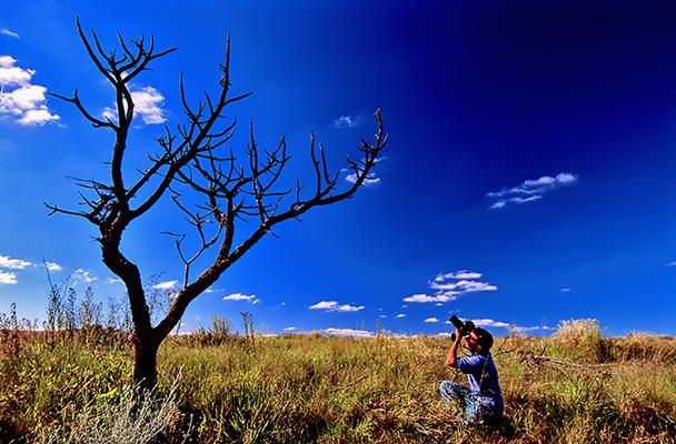 dry-tree.jpg