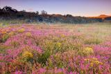 wild-flower-at-sunrise2.jpg