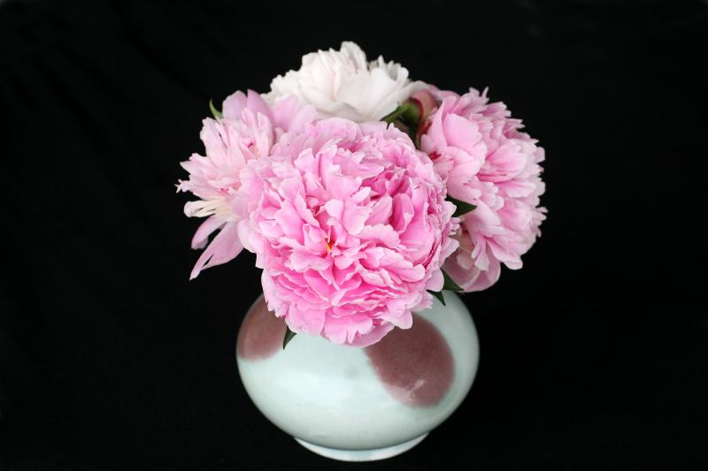 Fresh Cut Peonies from the LaGuardia Place Community Garden