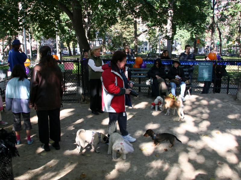 Halloween Party at the Small Dog Run