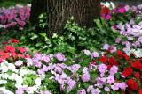 Impatiens at NYU Silver Towers Gardens