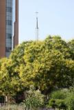 Golden Rain Trees & Catholic Center