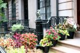 Coleus & Caladium Garden on West 10th Street