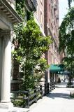 Rubber Tree on East 10th Street