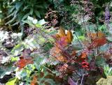 Heuchera Garden Plot