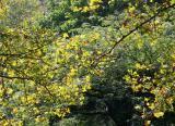 Mid Summer Tree Foliage Colors