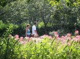 Sprinkling the Cleome Garden