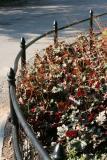 Heuchera Garden