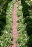 Alyssum Path