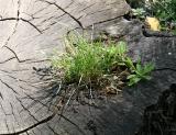 Grass in Tree Trunk