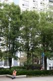Pear Trees - Summer