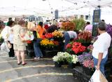 Flower & Produce Markets