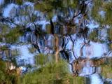 Reflection - Trees
