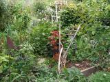 Garden Plow