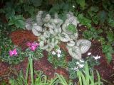 Begonias & Cyclamen