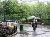 A Morning Walk in the Rain