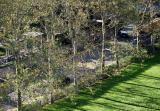 Sycamore Trees & Garden Driveway