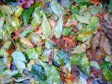 Sidewalk Foliage in the Rain