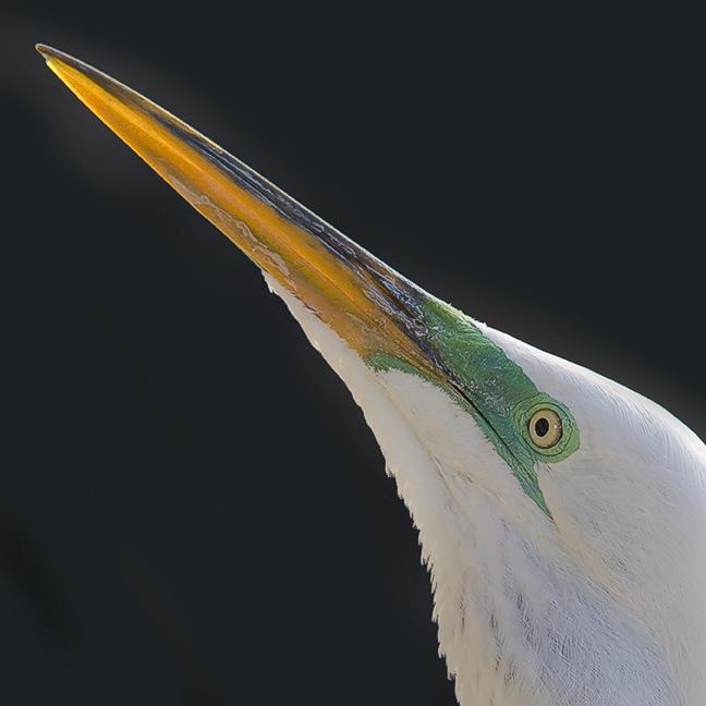 Sharp Beak