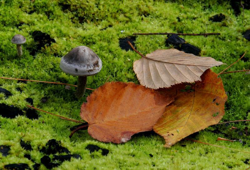 Fall Mushroom