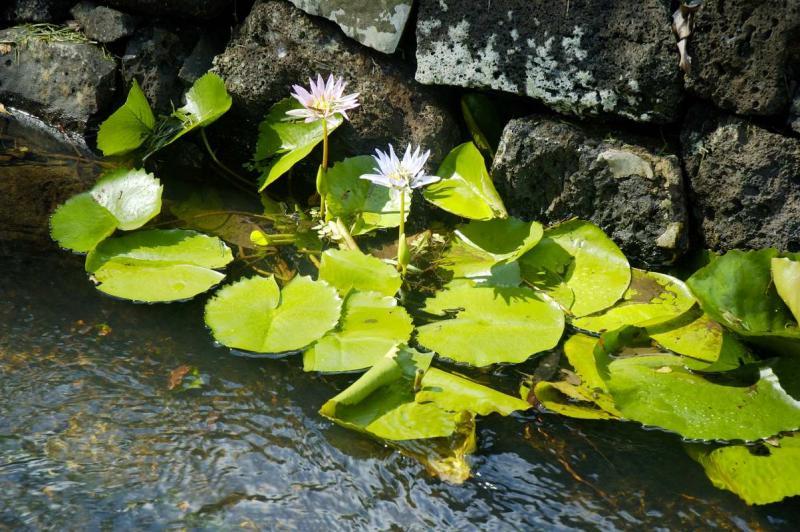 Pamplemousses Botanical Gardens