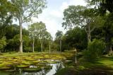 The giant water lily pond, Pamplemousses Botanical Gardens