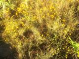 0552-Yellow Sun, Yellow Flowers.jpg