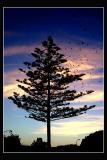 11.10.2005 ... Lost birds ...