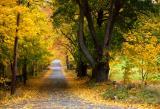 Old Lexington Road in Autumn