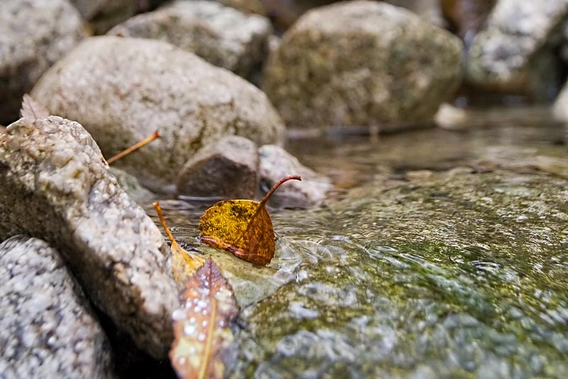 A leaf going down the stream