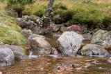 Small stream under a bridge