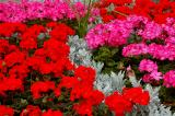 Colorful Flower Beds in Stalybridge