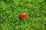 Grass with a fallen Strawberry