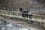 Sue and Bonny on the Towpath