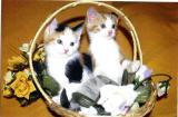 Kittens in a Yellow Basket