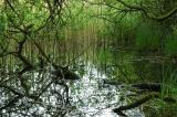 Water and Reeds 123