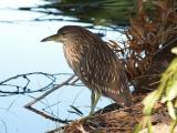 Wetland Bird Lo Rez.jpg