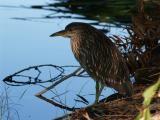 Wetland Bird No Flash Lo Rez.jpg