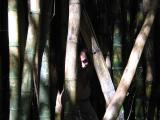Christian gets lost in the bamboo forest