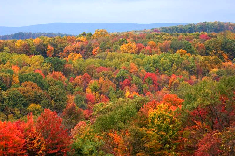 Fall Colors from the Ridge