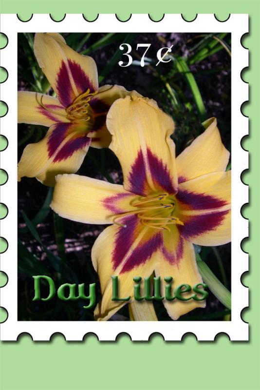Lillystamp2.jpg