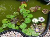 green pond.jpg