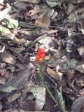 Interesting plant life on the forest floor.