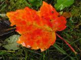 October Leaf.jpg