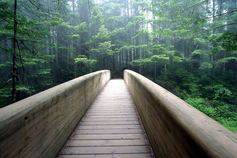 Walkway into trees.jpg