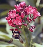 Bee Upside Down on Flowerjpg