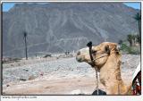 Sinai_140405_DSC_2014-pb.jpg