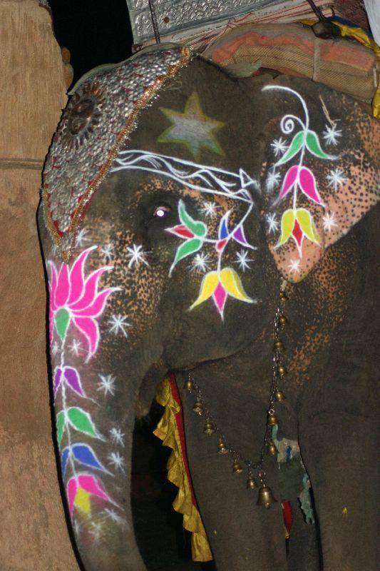 Choki Dhani, Decorated Elephant